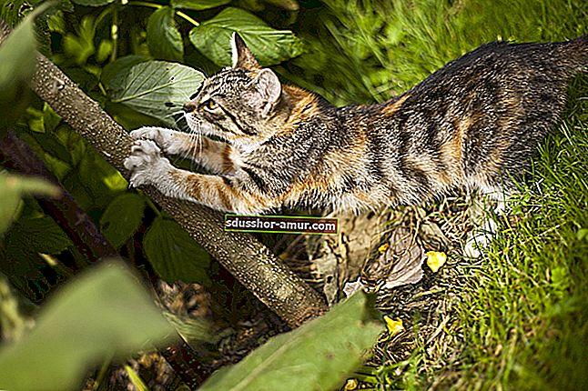 Как да махнем котките от вашата градина?