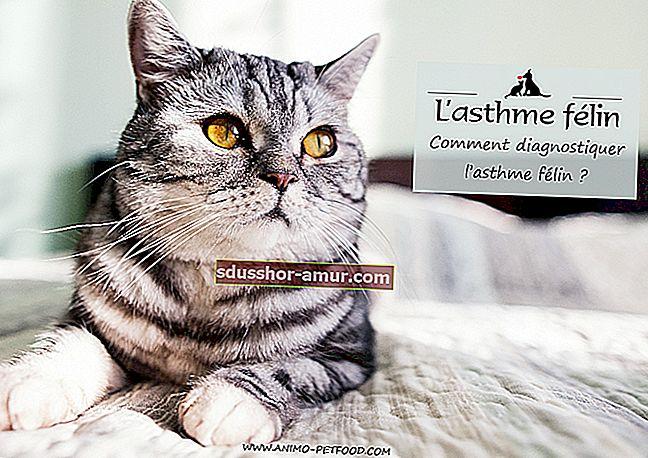 Безплатна кутия за котешка котка, изработена от вестникарска хартия.