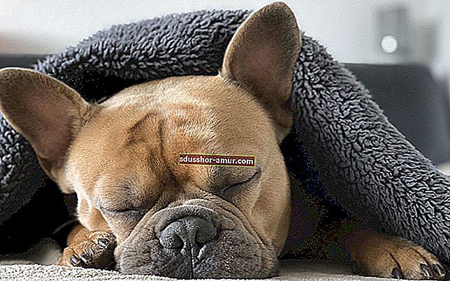 Толкова сладко ! 20 снимки на кученца, подремващи с плюша си.