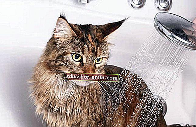 3 икономически съвета за правилно четкане на вашата котка.