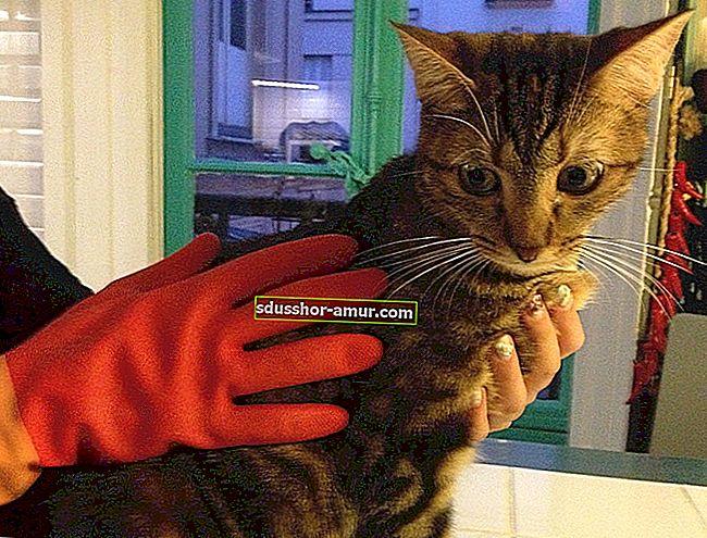 10 съвета, които абсолютно трябва да знаете, ако имате котка.