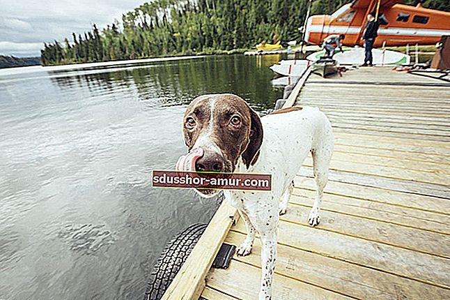 2 съвета на ветеринар за премахване на бълхи и кърлежи от кошницата за кучета.