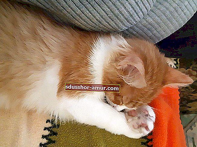 31 снимки на спящи котки, които ще ви накарат да се усмихнете за деня.