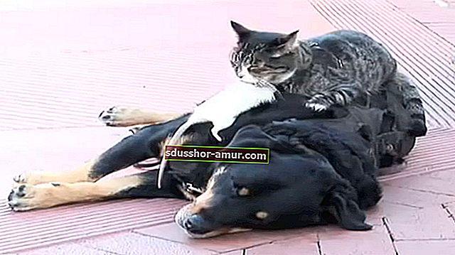 Тази котка със сигурност е НАЙ-КРАСИВАТА котка в света!