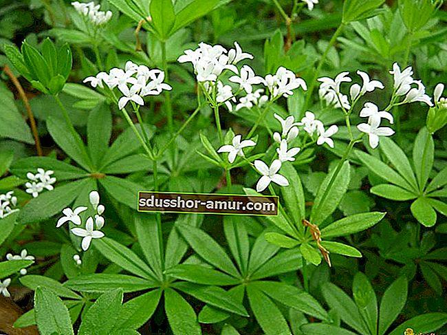 8 biljaka koje prirodno love insekte i komarce.
