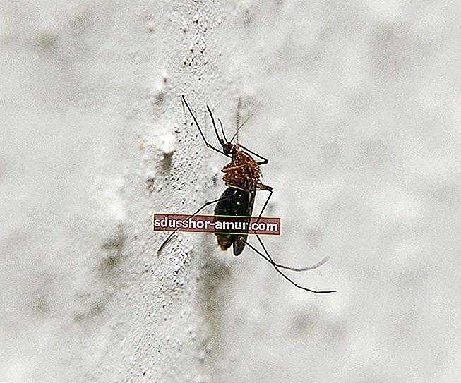 5 ZAISTA Učinkoviti prirodni lijekovi protiv komaraca.