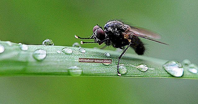 13 prirodnih savjeta za držanje muha.