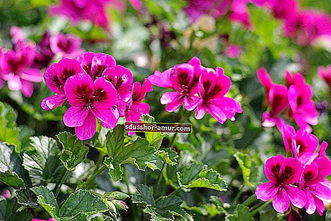 Koliko često zalijevati sobne biljke Jednostavan i praktičan vodič.
