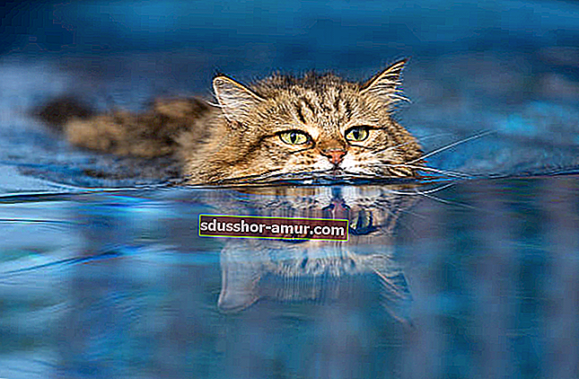 9 savjeta kako natjerati mačke da pobjegnu iz svog vrta PROGNOZA.