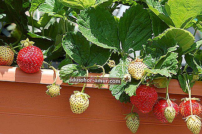 13 pogrešaka koje treba izbjegavati kod uzgoja aromatičnog bilja kod kuće.