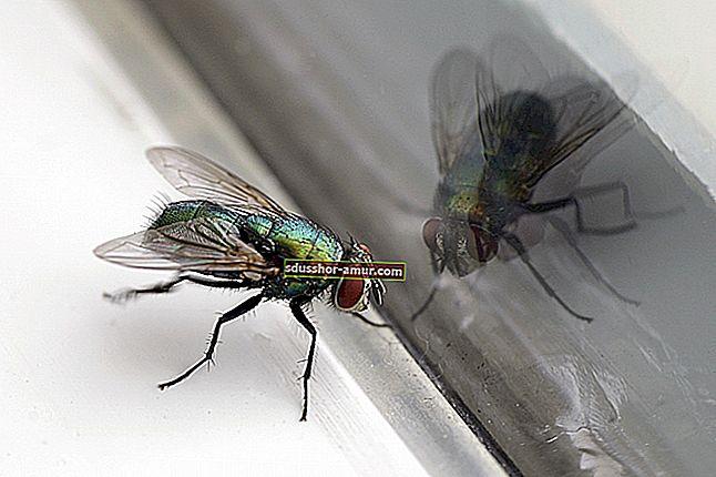 Bakinih 10 savjeta za lov na muhe.