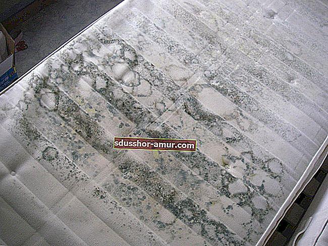 7 savjeta za uklanjanje mrlja od plijesni s tkanine.