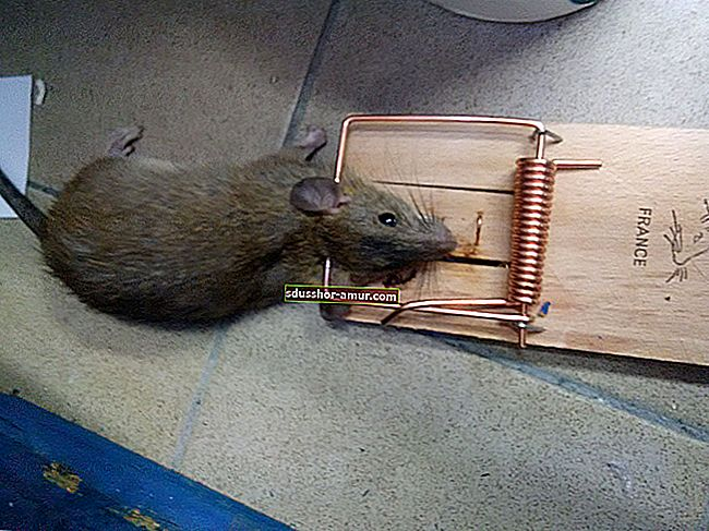 Kako se riješiti štakora? Koristite Coca-Colu kao snažni deratizator.