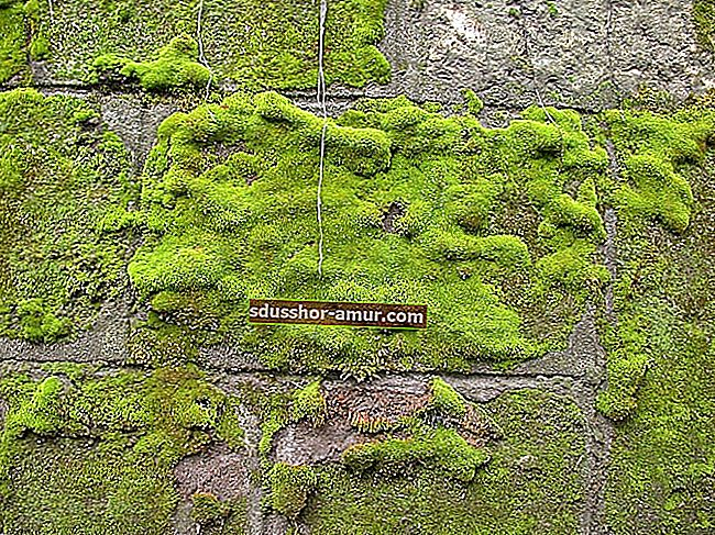 2 savjeta za uklanjanje mahovine s terase (otkriva ih vrtlar).