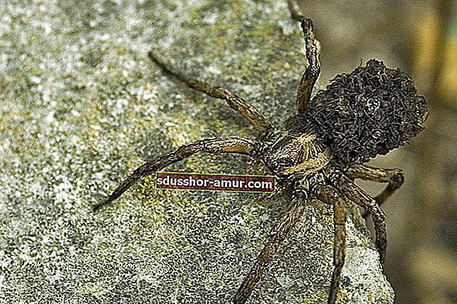 9 prirodnih savjeta kako držati pauke podalje od svog doma.