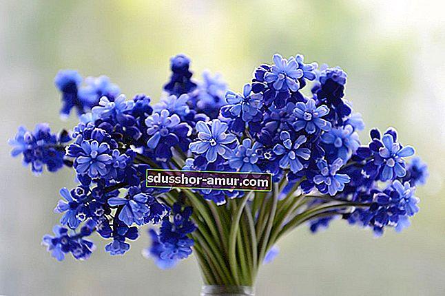 Svaki cvijet ima svoje značenje. Ovdje je Vodič za jezik cvijeća.