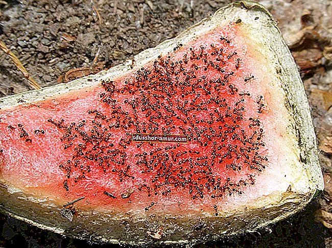 Мои 5 советов, как естественным образом отогнать муравьев из дома.