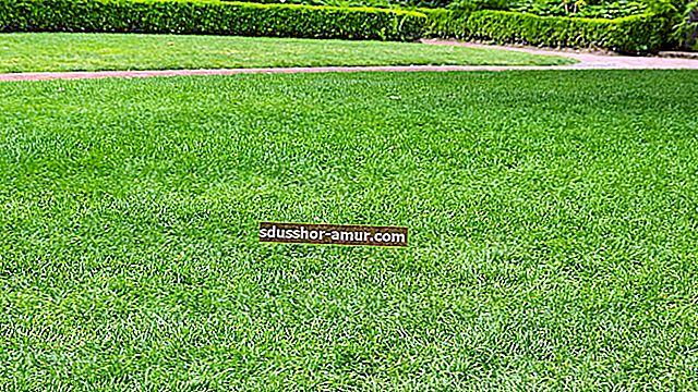 Мох на лужайке: простой способ избавиться от него.