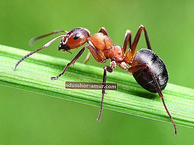 Tajna brzog rješavanja mrava.