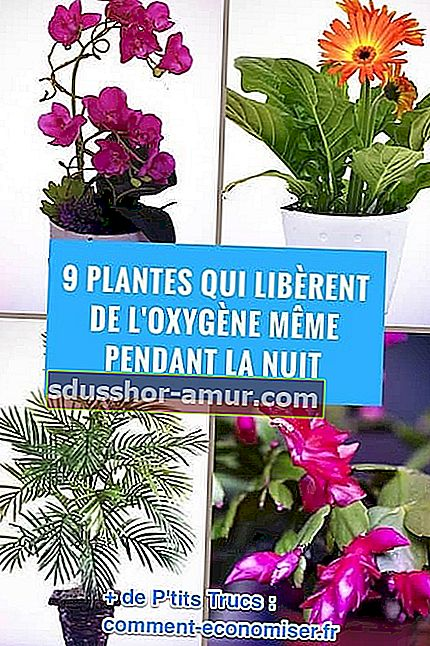 Planul de plante gujarati pentru a pierde pierderea în greutate  