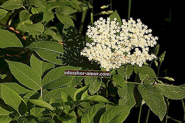 63 Основные лекарственные растения для лечения.