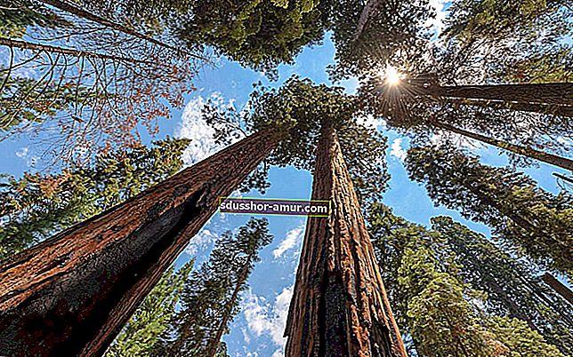 10 самых УДИВИТЕЛЬНЫХ деревьев в мире.
